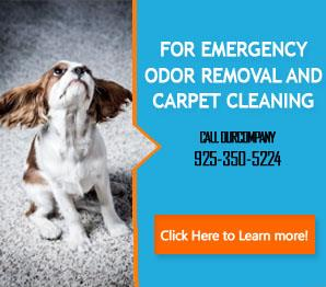 Blog | All Carpet cleaning services